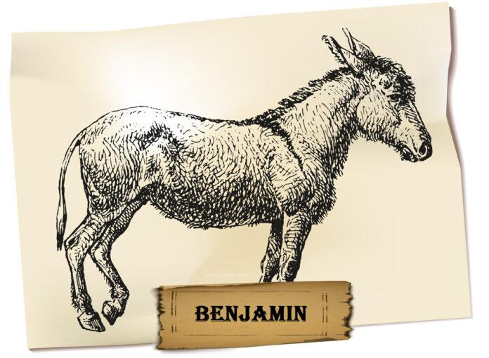 Animal Farm Benjamin